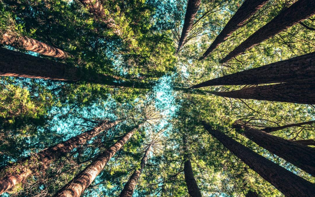 Bureau Vallée recherche des entrepreneurs soucieux de l'environnement.